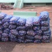 Detectan contrabando 37 sacos ajo de Haití