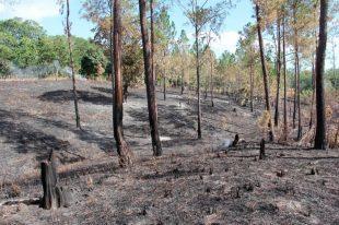 Haitianos queman 20 mil tareas de bosques en Santiago Rodriguez